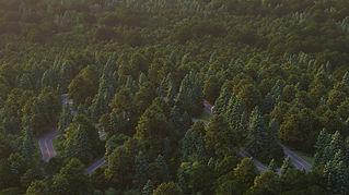 Forest-1536x864_Lumion10.jpg