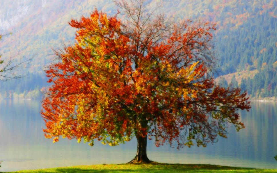 colorful-autumn-tree-1080P-wallpaper-middle-size