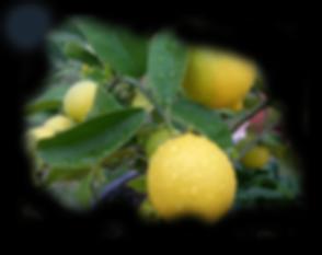 lemons_glaucoma_vision.png
