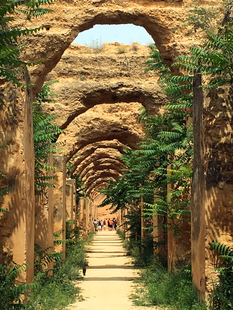 MOROCCO FOREST