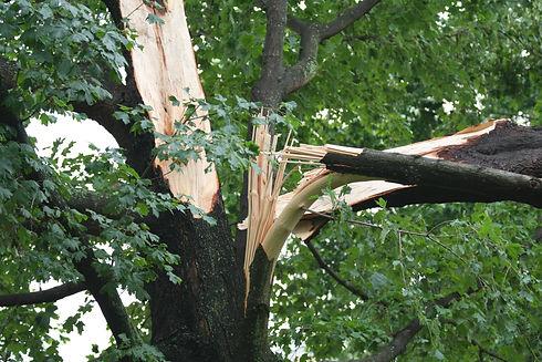 damaged tree Dayton Ohio