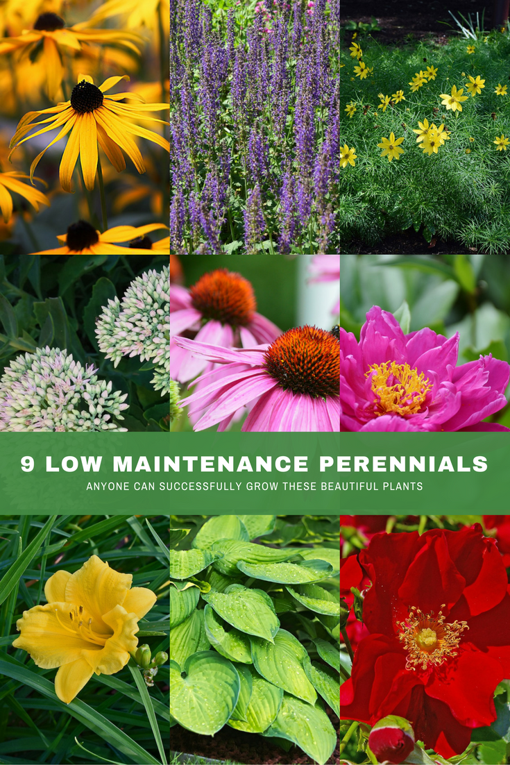 9 low maintenance plants that anyone can grow successfully.