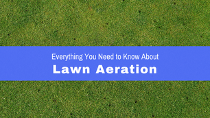Lawn Aeration - What You Need to Know