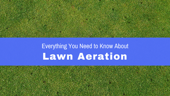 Everything you need to know about lawn aeration.