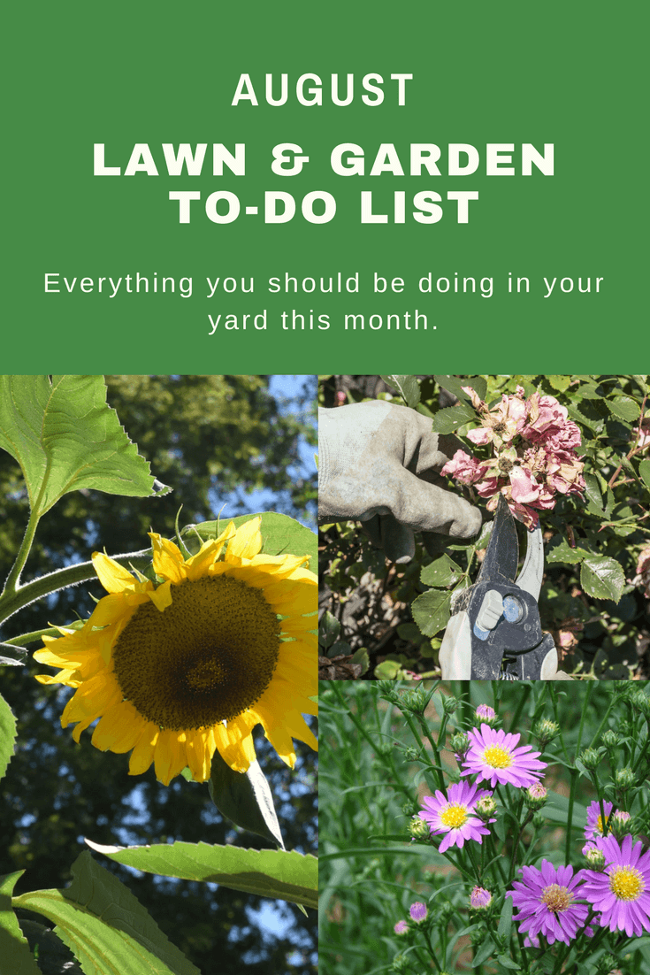 Tasks you should complete in your garden during the month of August.