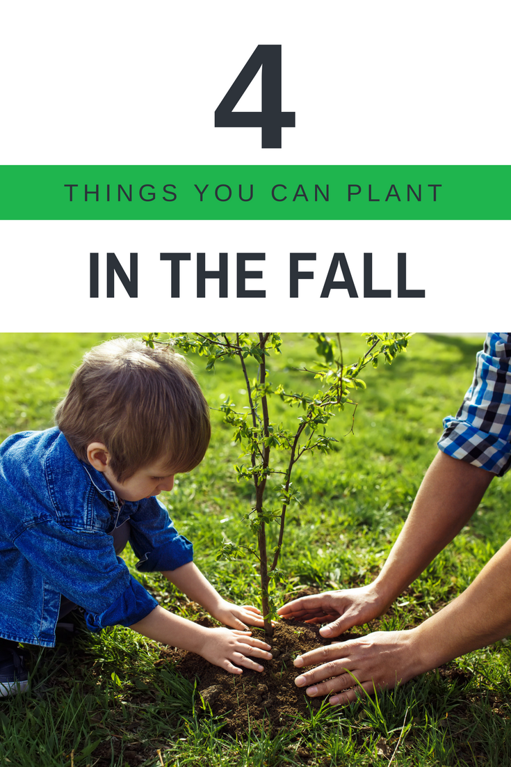 4 items you can plant in the fall in Dayton Ohio.