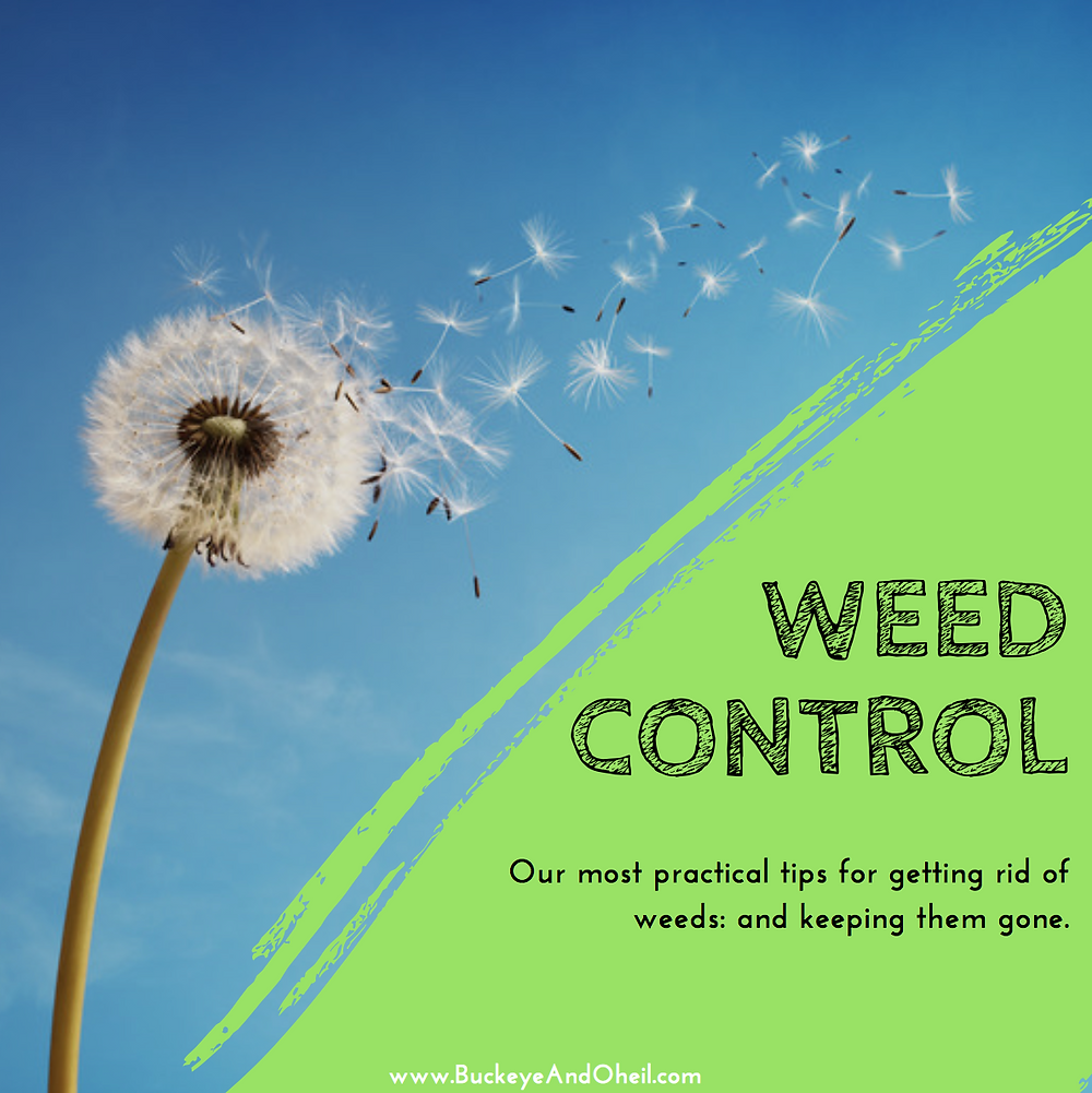 Our most practical tips for getting rid of weeds and keeping them gone- Dayton, OH