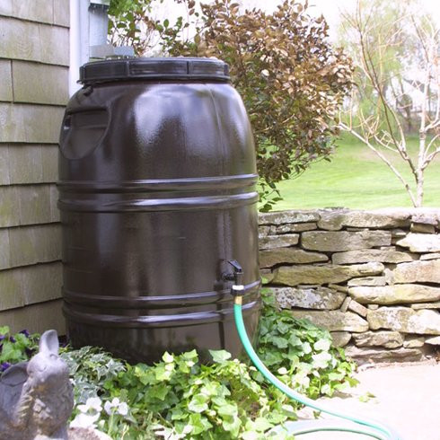 In August conserve water in your garden with a rainbarrel.