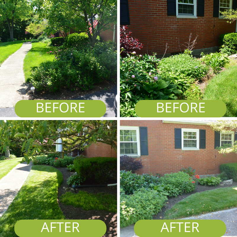 Before and after shot of landscaping at Kettering Ohio home.