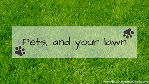 Pet Urine and Your Lawn