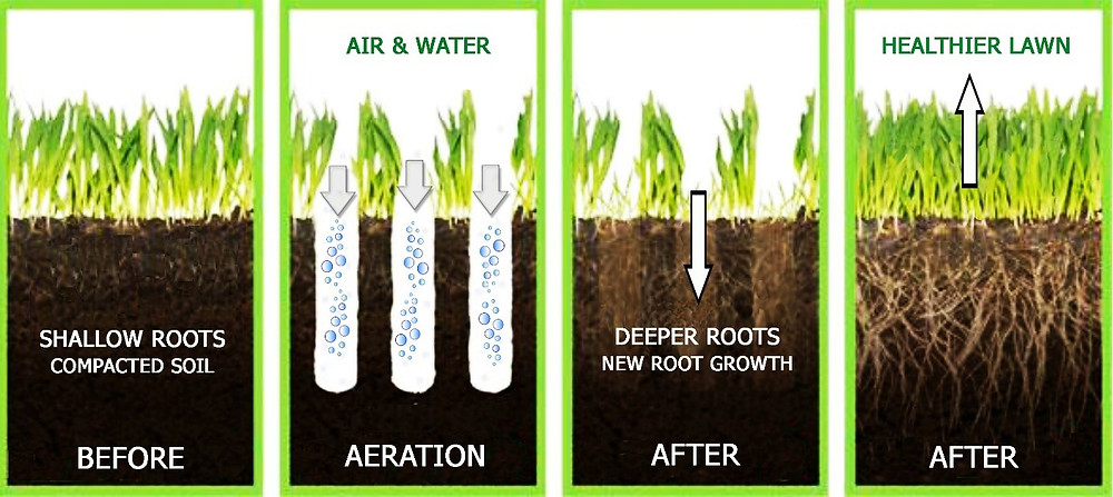 Benefits of core aeration image via The Lawn Institute.
