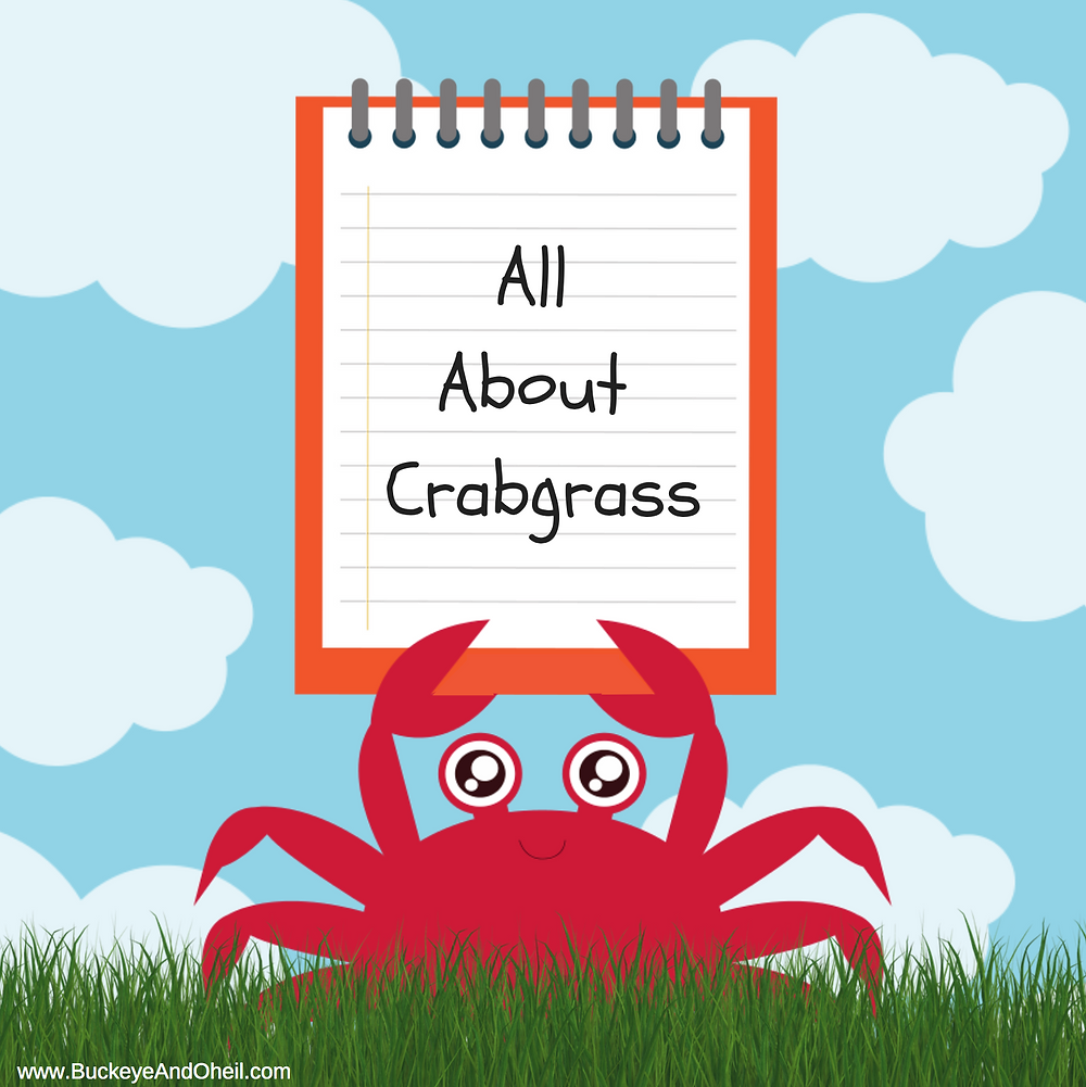 crabgrass removal and prevention dayton ohio