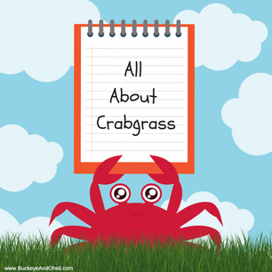 All About Crabgrass