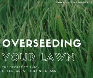 Overseeding: the Secret to a Thick, Great-Looking Lawn