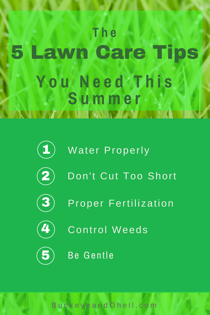 Summer lawn care tips to help your grass survive summer heat.