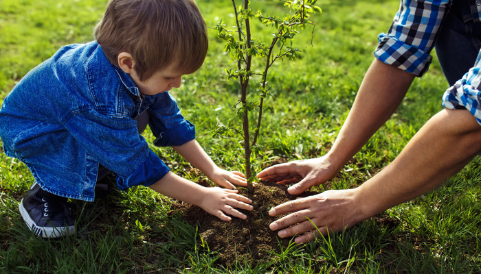 Plant shrubs and trees in the fall to establish root growth.