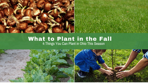 What to Plant During Fall In Ohio