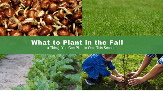 What to plant in the fall in Dayton Ohio.