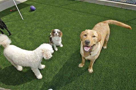 Pets on artificial grass pet run