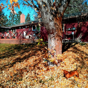 Do not leave fall leaves on your grass to decompose.