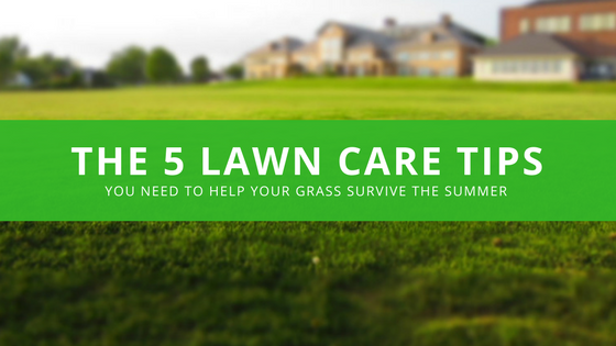Blog Header for tips to help your lawn survive during the summer months in Dayton Ohio