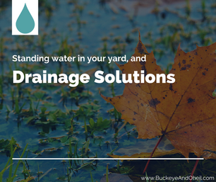 Standing Water in Your Yard and Drainage Solutions