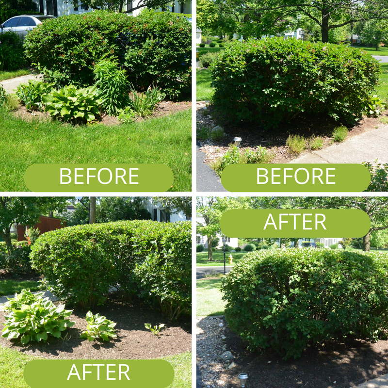 Trimmed shrubs, mulch, landscaping at Kettering Ohio home.