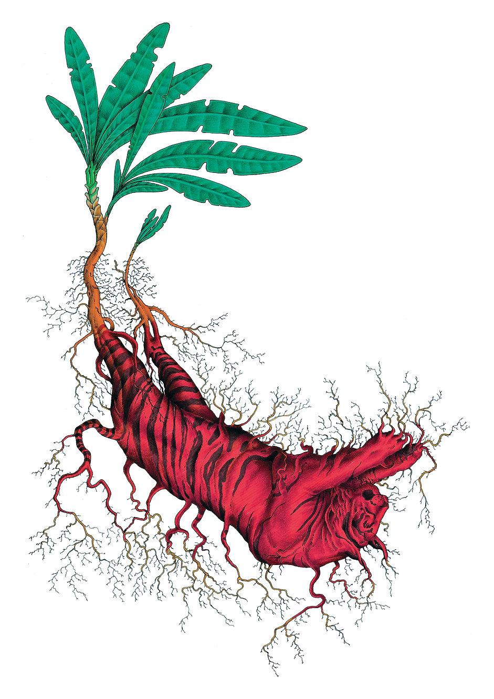 Gorgonide neofita.jpg