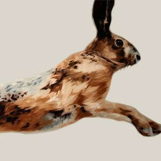 Rabbit Wins The Race