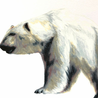 Polar Bear (study)