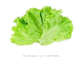 Lettuce copy.png
