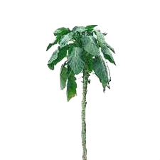 Walking Stick Kale.png
