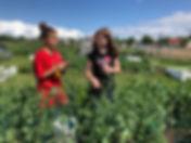 2019 09 C 4-H Garden Produce.jpg