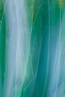 agave-13.jpg
