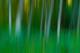 ImpressionistForest-2.jpg