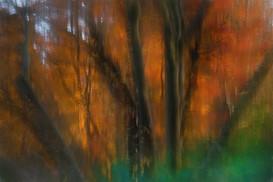 orangeforest-13.2.jpg