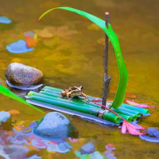 FrogBoat01.jpg
