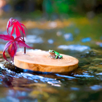 frog005.jpg