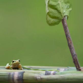 Frog02.jpg