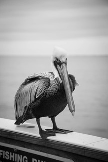 A Trip to Fort Myers, Florida