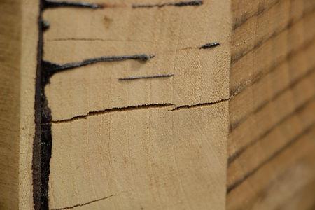 Wooden Plug Closeup.jpg