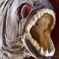 piranha-attack.jpg