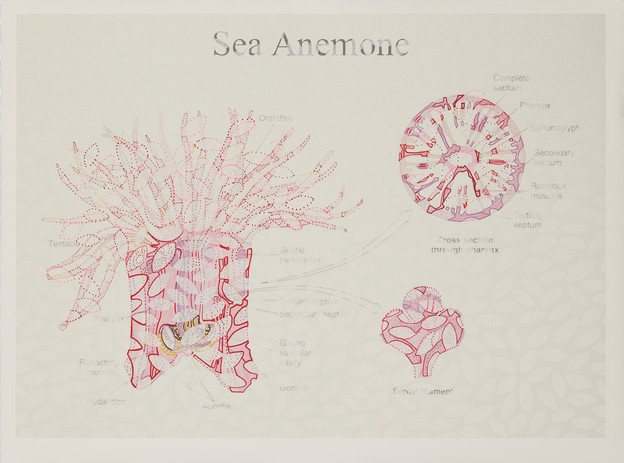 Dancing Sea Anemone