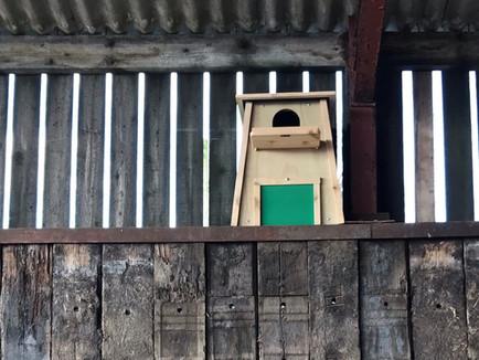 How to Make a Barn Owl Nest Box