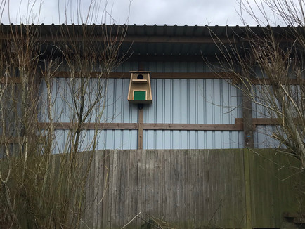 Siting your Barn Owl Nest Box