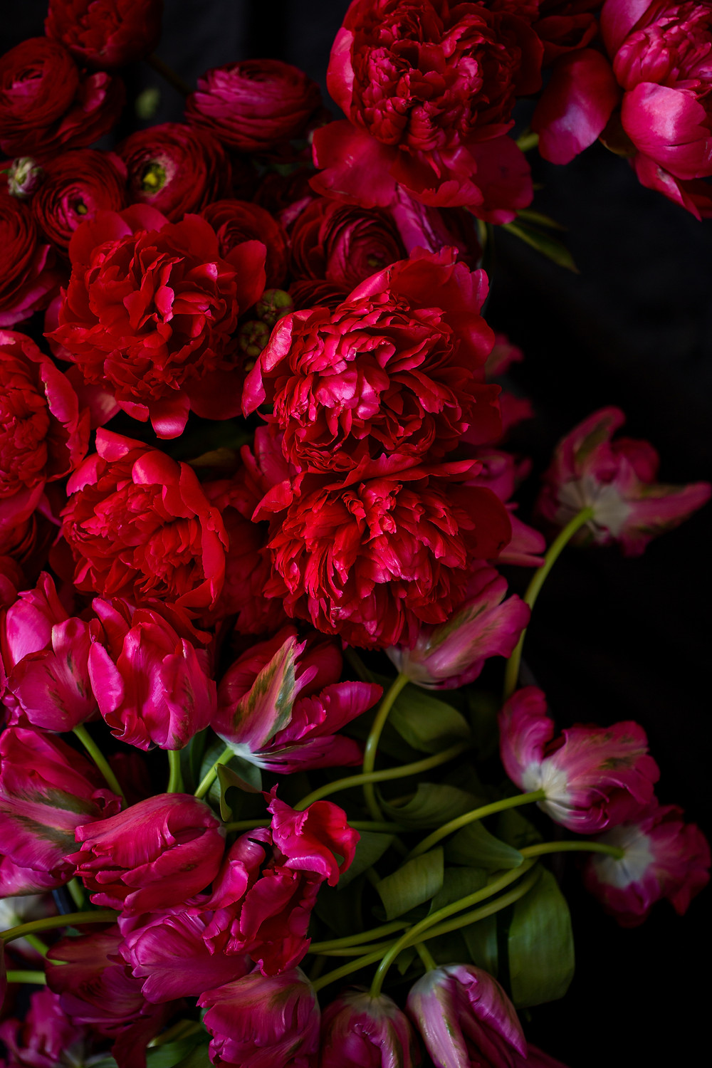 Flower photo of peonies and parrot tulips