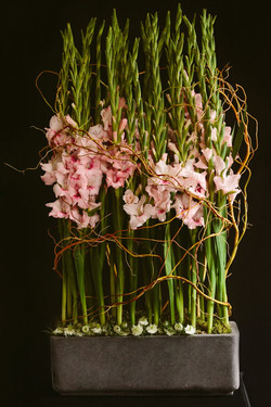gladiola floral art