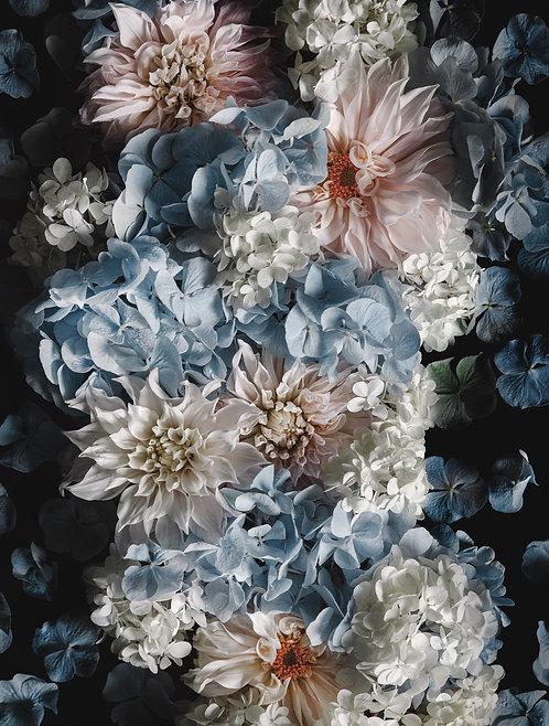 Hydrangea & Dahlias