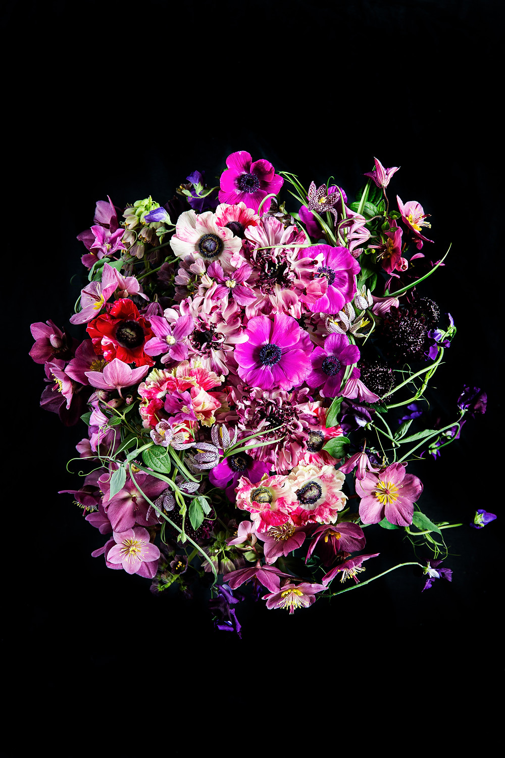 Floral photography using jewel toned flowers