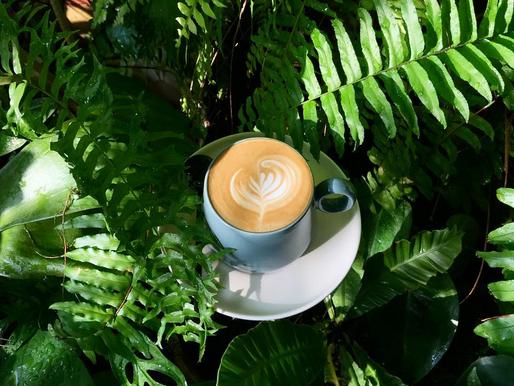 13 Drive-thru Coffee with DROP in Penang☕